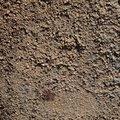 Concrete Rough 006