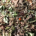 Debris Compost 001
