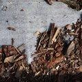 Debris Tree Bark 003
