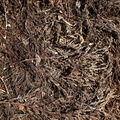 Debris Wood Chips 004