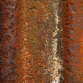 Rust Completely 030