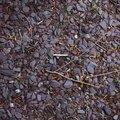 Soil Gravel 016