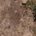 Soil Stoned 002