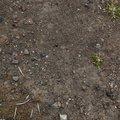Soil Stoned 007
