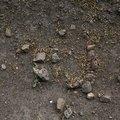 Soil Stoned 008
