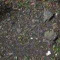 Soil Stoned 010