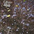 Soil Stoned 013