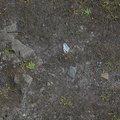 Soil Stoned 014