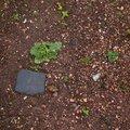 Soil Stoned 015