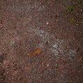 Soil Stoned 016