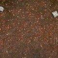 Soil Stoned 017