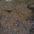 Soil Stoned 020