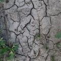 Soil Cracked 001
