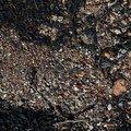 Sea Pebble 010