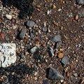Sea Pebble 011