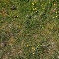 Nature Grass Flowers 012
