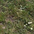 Nature Grass Flowers 014