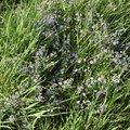 Nature Grass Flowers 002