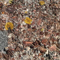 Nature Lichen 010