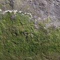 Nature Lichen 012