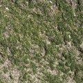 Nature Lichen 013