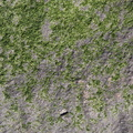 Nature Lichen 015