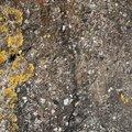 Nature Lichen 004
