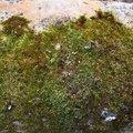 Nature Moss 005