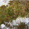 Nature Moss 006