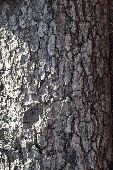 Nature_Tree_Trunk_015.JPG
