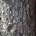 Nature Tree Trunk 015