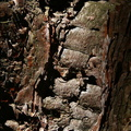 Nature Tree Trunk 016