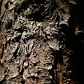 Nature Tree Trunk 017