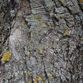 Nature Tree Trunk 001