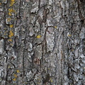 Nature Tree Trunk 002