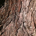 Nature Tree Trunk 004