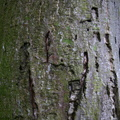 Nature Tree Trunk 005