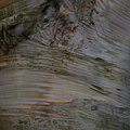 Nature Tree Trunk 007