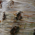 Nature Tree Trunk 008