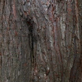 Nature Tree Trunk 009
