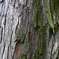 Nature Tree Trunk 011
