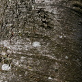 Nature Tree Trunk 014