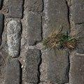 Road Stone 004