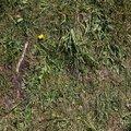 Nature Grass 015