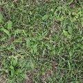 Nature Grass 004