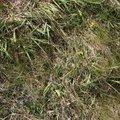 Nature Grass 005