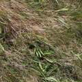 Nature Grass 006