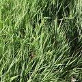 Nature Grass 007