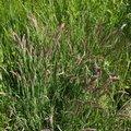 Nature Grass 009