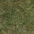 Nature Grass 010